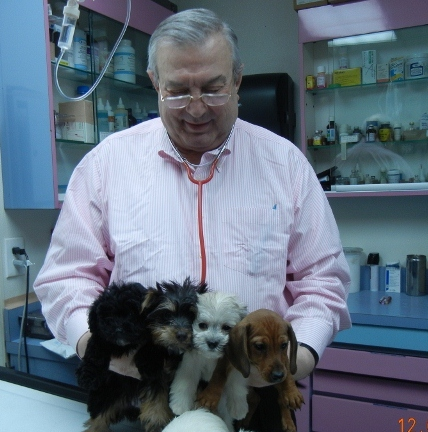 dr-alexandru-and-puppies-640x480.jpg